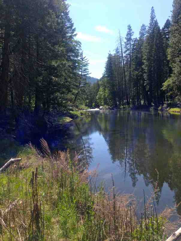 The lovely Truckee River.