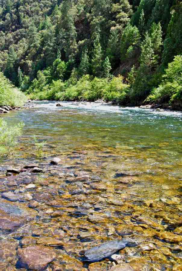 American River 1
