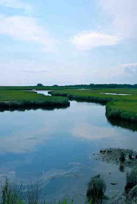 Views from the bikeway: a classic Cape Cod marsh.
