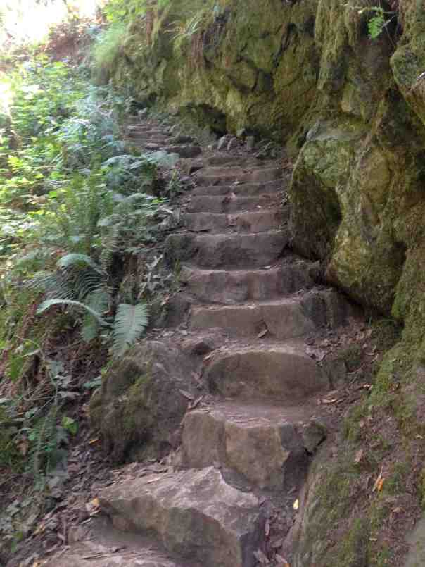Some of the many stairs along Steep Ravine.