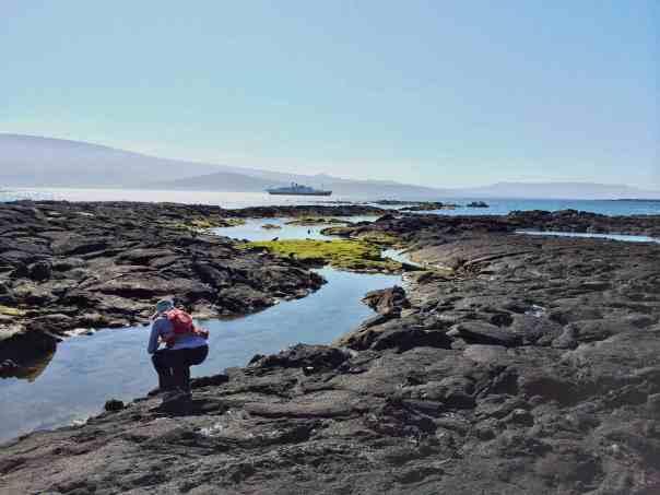 2 Monday Fernandina EM exploring the ropy lava