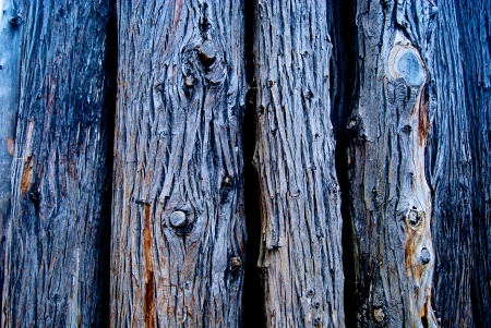 Tree Bark 1