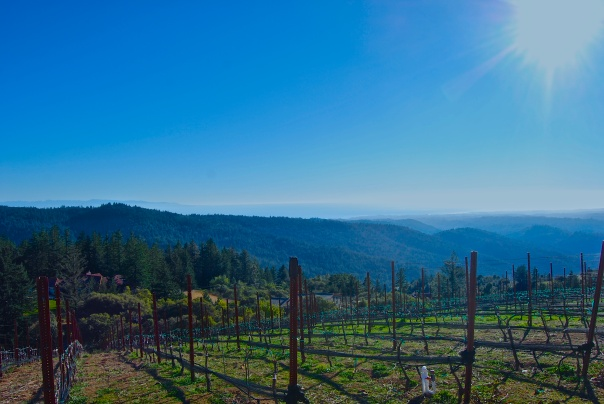 8 Loma Prieta Vineyards