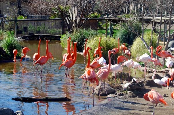 2 Flamingos