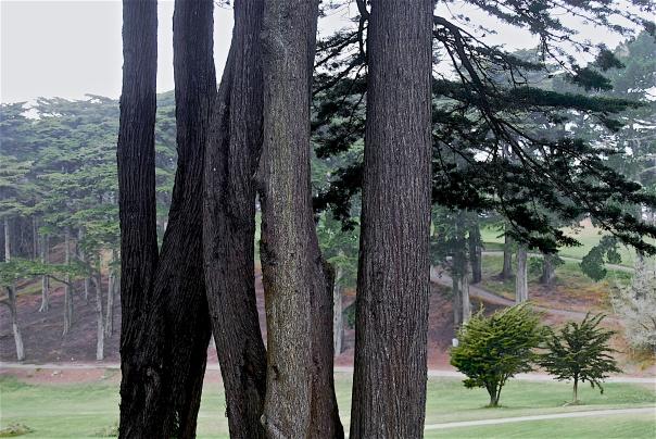 10 Cypress 2